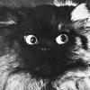 Аватар пользователя Отто Пырин